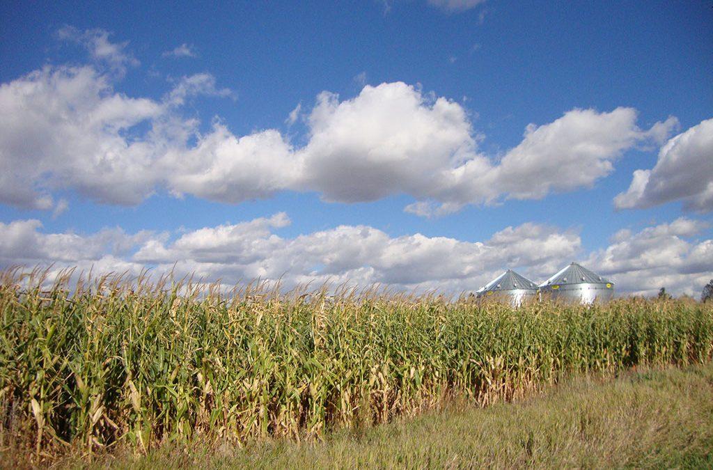 Bennett County Farmland