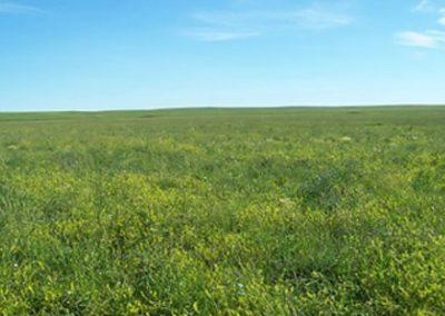 McCune Farmland