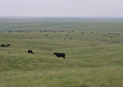 Butte County Grassland