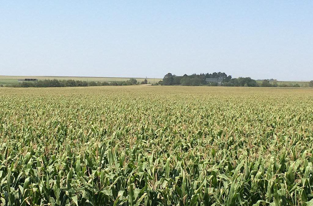 Hughes County Farmland