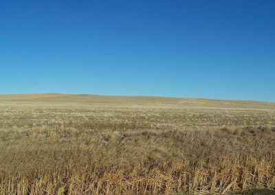 Benchmark Farm- Dryland Crop