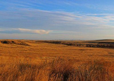 Stockert Ranch Auction