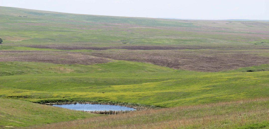 Northstream Investments- Farmland & Grassland Auction