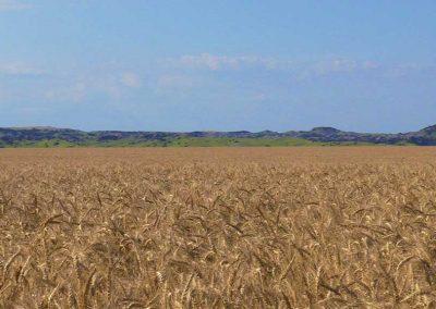 Tabletop Farmland