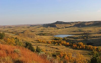What to Expect When Selling Your Farm or Ranch by Auction