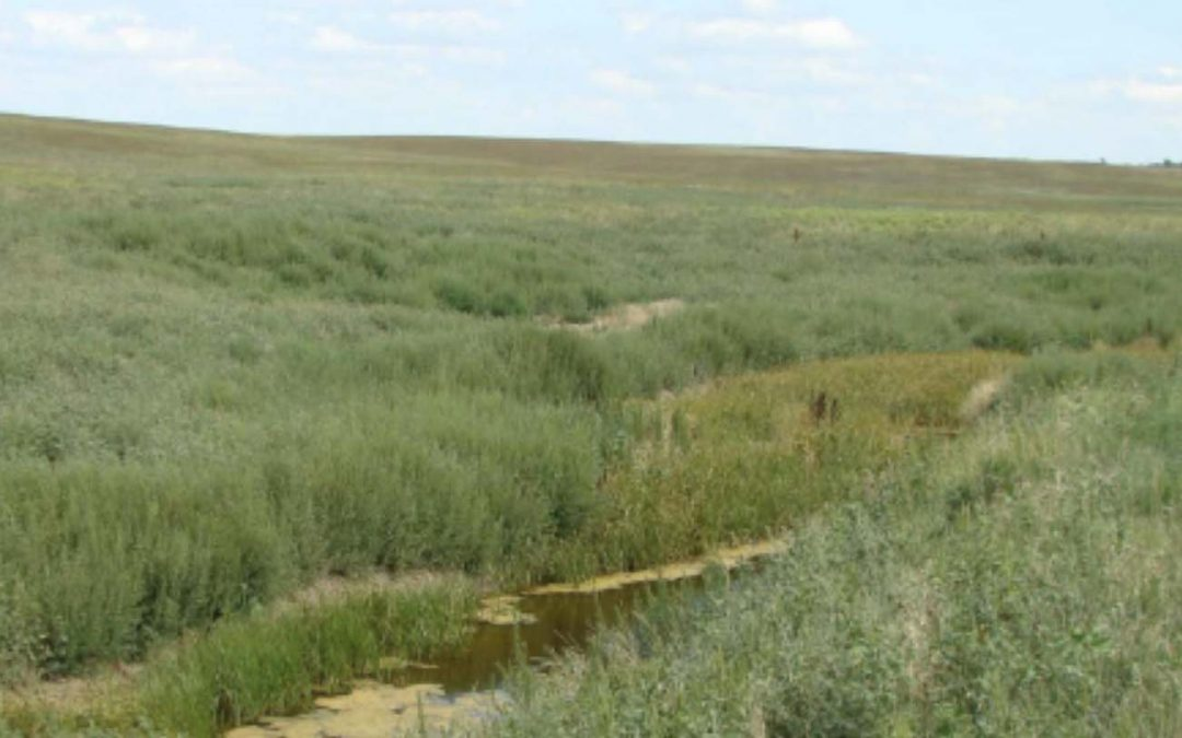 Ollerman Grassland